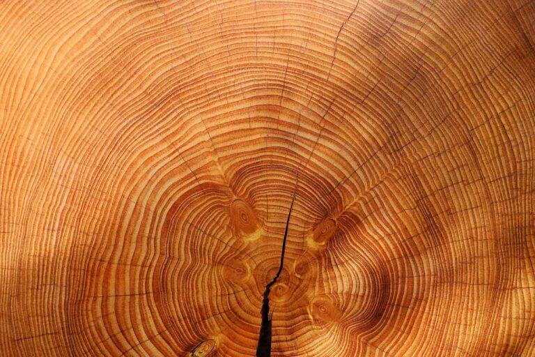 estetica-legno